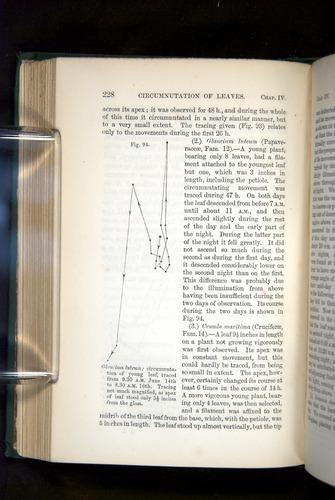 Image of Darwin-F1325-1880-228