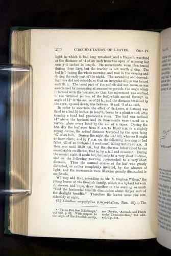 Image of Darwin-F1325-1880-230