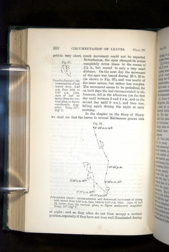 Image of Darwin-F1325-1880-232