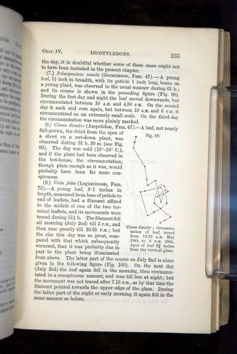 Image of Darwin-F1325-1880-235