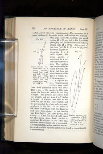 Image of Darwin-F1325-1880-236