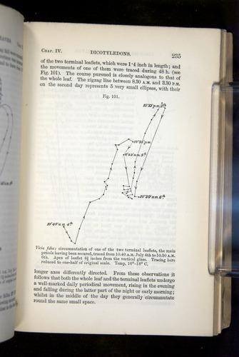Image of Darwin-F1325-1880-237