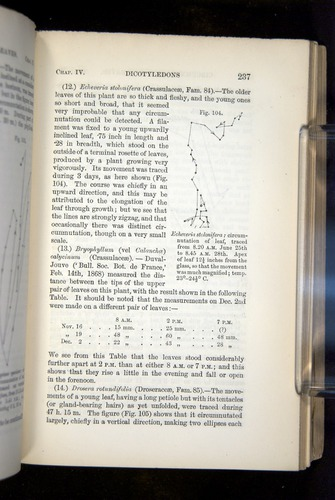 Image of Darwin-F1325-1880-239