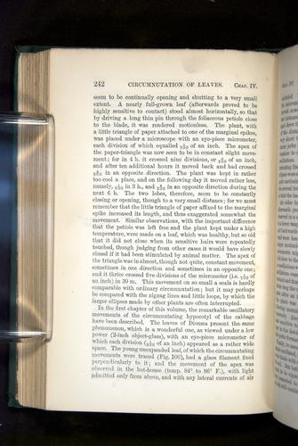Image of Darwin-F1325-1880-242