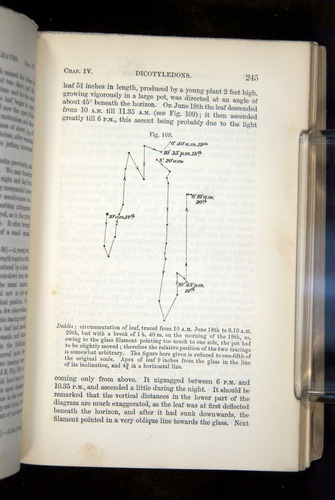 Image of Darwin-F1325-1880-245