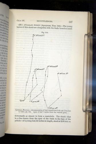 Image of Darwin-F1325-1880-247