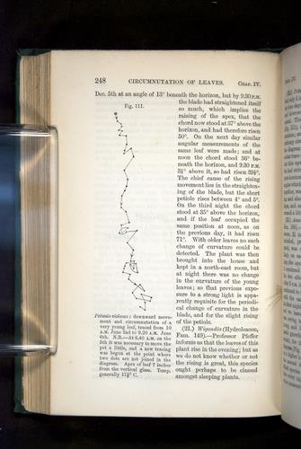 Image of Darwin-F1325-1880-248