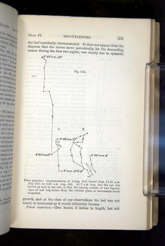 Image of Darwin-F1325-1880-251