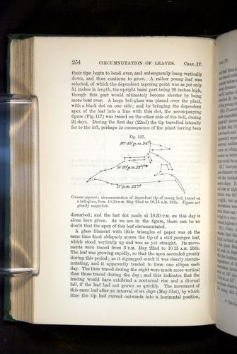 Image of Darwin-F1325-1880-254