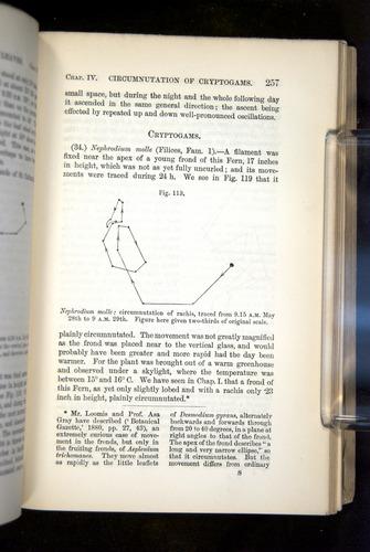 Image of Darwin-F1325-1880-257