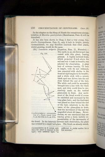 Image of Darwin-F1325-1880-258