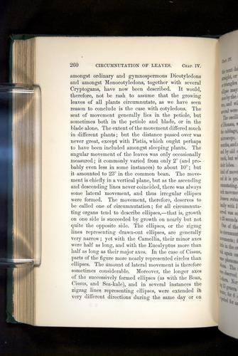 Image of Darwin-F1325-1880-260