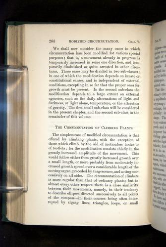 Image of Darwin-F1325-1880-264