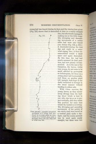 Image of Darwin-F1325-1880-270