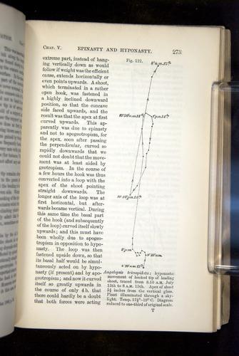 Image of Darwin-F1325-1880-273