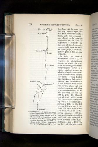 Image of Darwin-F1325-1880-274