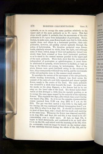 Image of Darwin-F1325-1880-278