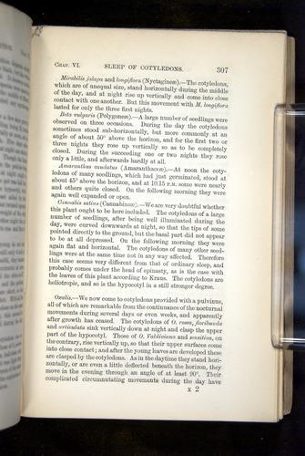 Image of Darwin-F1325-1880-307