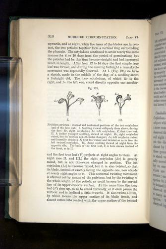 Image of Darwin-F1325-1880-310