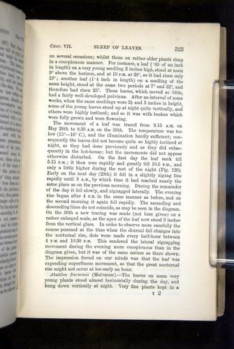 Image of Darwin-F1325-1880-323