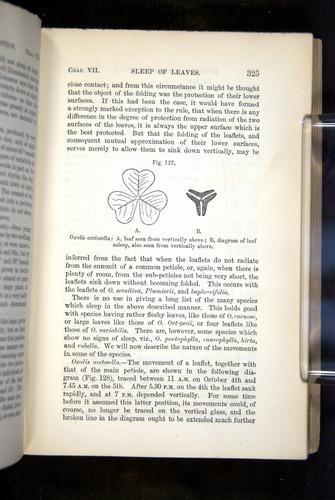 Image of Darwin-F1325-1880-325