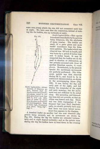 Image of Darwin-F1325-1880-328