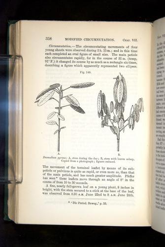 Image of Darwin-F1325-1880-358
