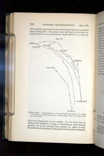 Image of Darwin-F1325-1880-378
