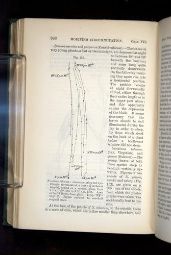 Image of Darwin-F1325-1880-386