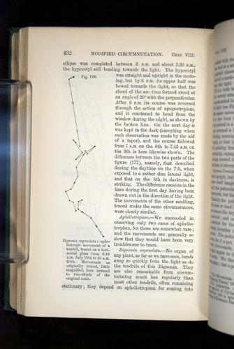 Image of Darwin-F1325-1880-432