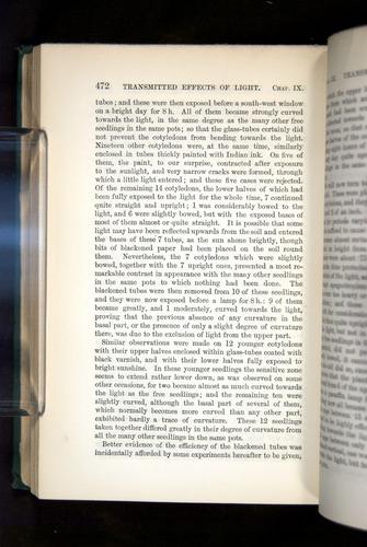 Image of Darwin-F1325-1880-472