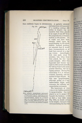 Image of Darwin-F1325-1880-496