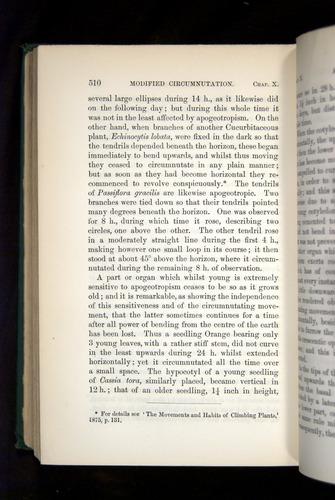 Image of Darwin-F1325-1880-510