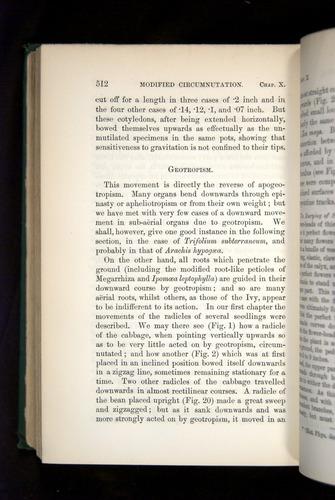 Image of Darwin-F1325-1880-512