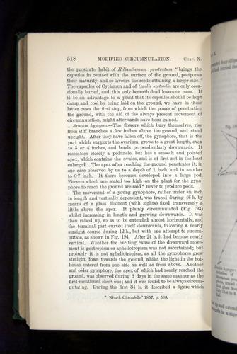 Image of Darwin-F1325-1880-518