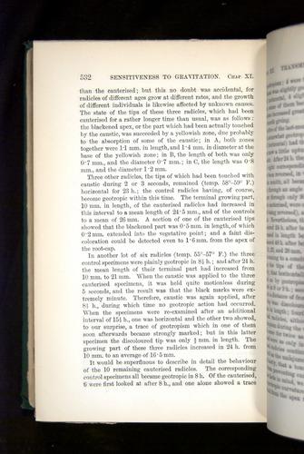 Image of Darwin-F1325-1880-532