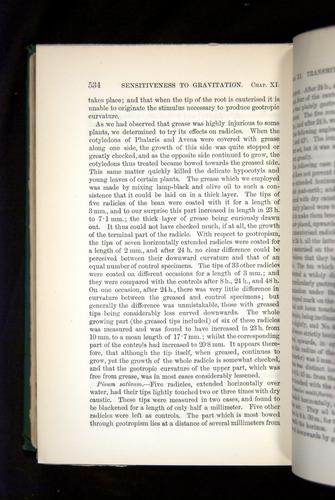 Image of Darwin-F1325-1880-534