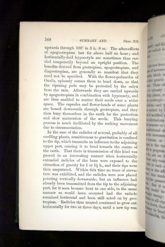 Image of Darwin-F1325-1880-568