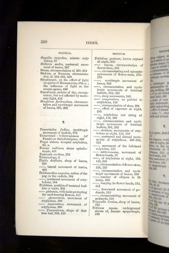 Image of Darwin-F1325-1880-590