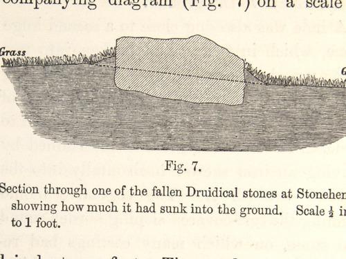 Image of Darwin-F1357-1881-156