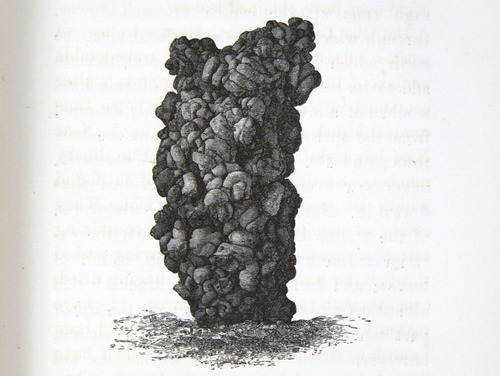 Image of Darwin-F1357-1881-det-107