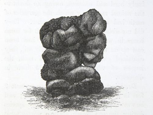 Image of Darwin-F1357-1881-det-127