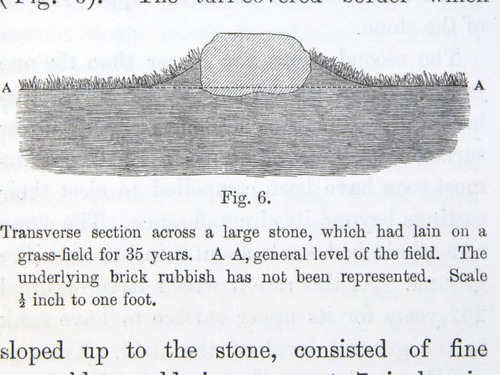 Image of Darwin-F1357-1881-det-151