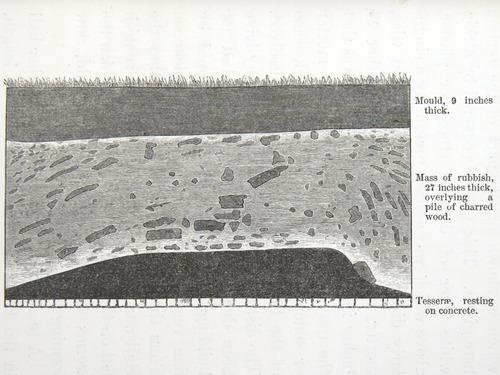 Image of Darwin-F1357-1881-det-203