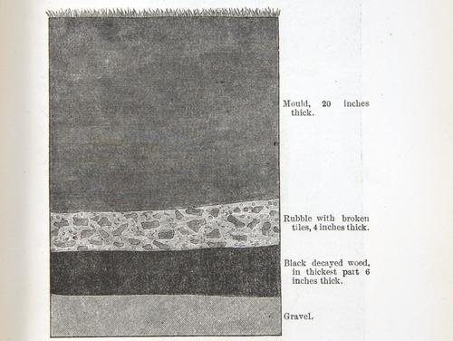 Image of Darwin-F1357-1881-det-207