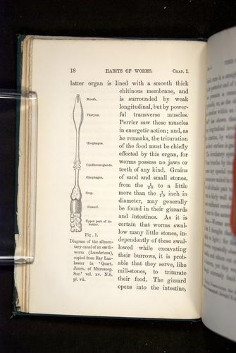 Image of Darwin-F1357-1881-018