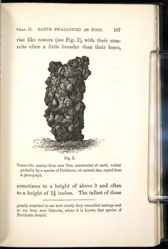 Image of Darwin-F1357-1881-107