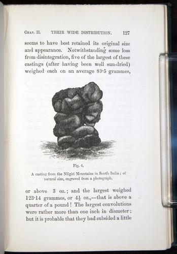 Image of Darwin-F1357-1881-127