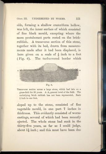 Image of Darwin-F1357-1881-151