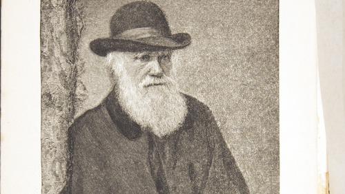 Image of Darwin-F1453.3-1887-zzzz-det-000-fp